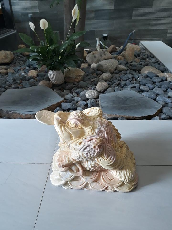 Thiềm thừ tại Đà Nẵng